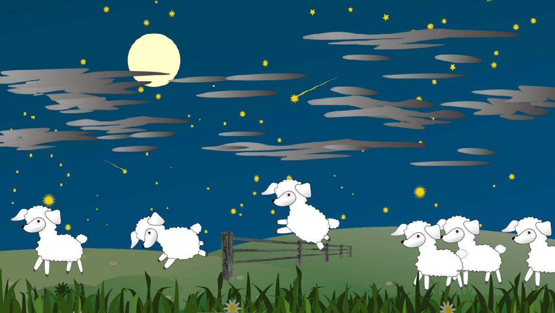Compter les moutons pour s'endormir, ça marche ! (Haute Garonne)