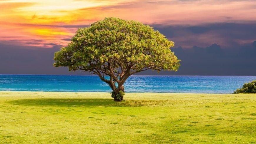 La posture de l'arbre pour renforcer la confiance en soi de son enfant (Haute Garonne)