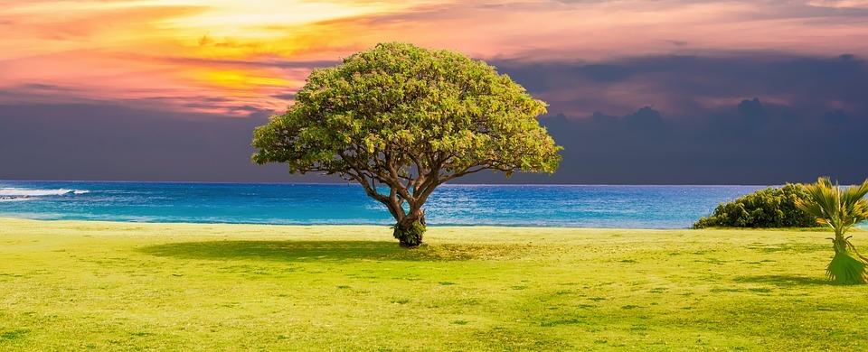 La posture de l'arbre